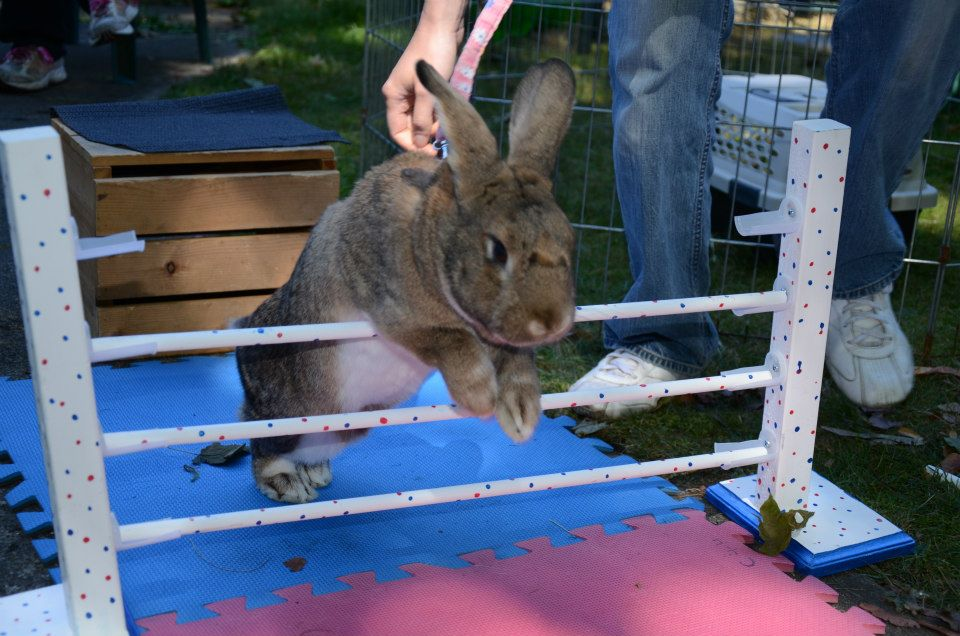 vancouver rabbit agility club